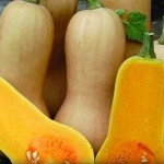 featured-waltham-butternut-squash